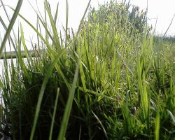 grassandgrass by priesteres-stock