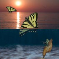 Waterfly by pril