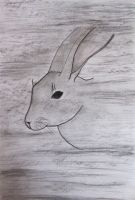 Rabbit by Lost-in-the-day