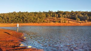 Early morning exploration Waroona Dam W.A. by RaynePhotography