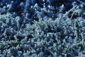 Iced Grass by Prestige-Photography