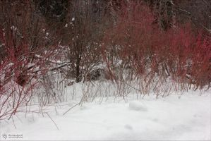 Red Branches at Bloody Brook by RhiskandPeril