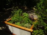 Herb Garden by Pentacle5