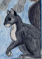 Collage part: Squirrel by Sarenea