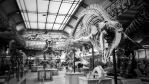 Musee d'histoire naturelle, Paris by Poisoned-Pleasure