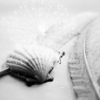 Shell and Feathers by kbhollo