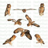 Owl Pack Stock 1 by Shoofly-Stock