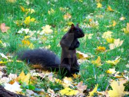 Squirrelly by beautythroughalens