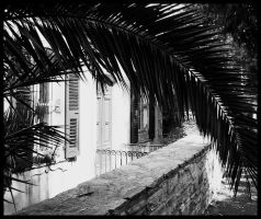 Bastia - House in a Palm by michelv