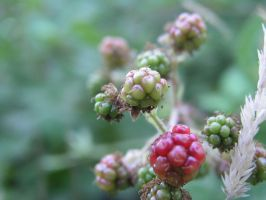 Berries I by FoxPhotos