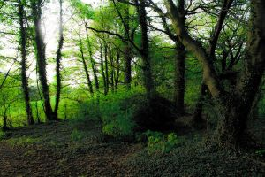 Green Trees by IFR