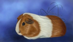 Guinea pig - Red Dutch Commission by Leia1987