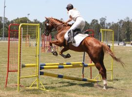 STOCK Showjumping 385 by aussiegal7