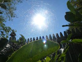 Sun Throught Webs by kml91225