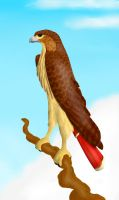 Red Tailed Hawk by Symrea