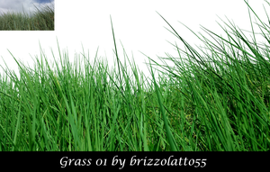 Grass 01 by Brizzolatto55