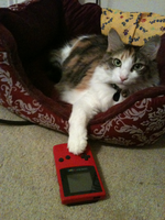 Playing my owners Gameboy by RaiinbowRaven