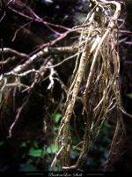 Roots 03 by AnitaJoy-Stock
