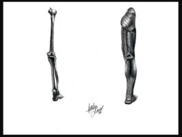 Leg Structure by Senerity