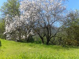 Cyprus,spring time forest 04~ (Stock) by Nanalina20