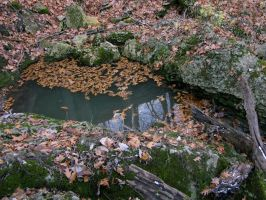 puddlepond by Photogenetic