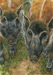 Red River Hogs ACEO by elektroyu