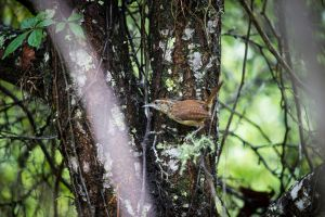 Wren on the Wood by PareliusC