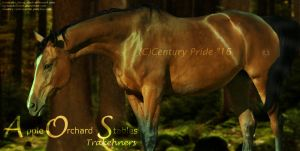 Apple Orchard Trakehners by CenturyPride
