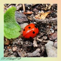 ladybug reincarnation by GabrielWings