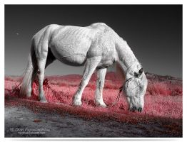 Red - infrared by LightSculpting