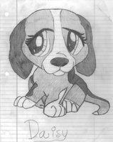 Beagle Drawing by MelodyForte