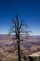 Dead tree in Grand Canyon by MCL28