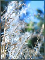 Wispy Blue by shutterbugmom