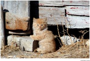 Orange Kitten Closer by hunter1828