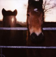 nosey by film400