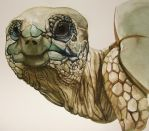 Tortoise Watercolor by Calcitrix