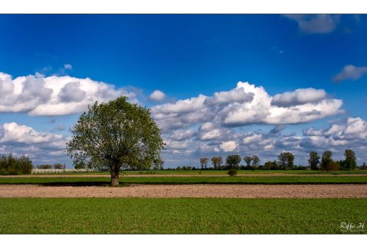 Spring 2011 pt.3 by Riffo