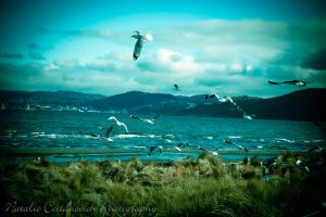 Petone beach on a windy day 2 by natzcv