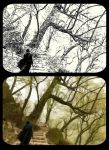 Toward to Forest Of Mystery ... by elyadthepain