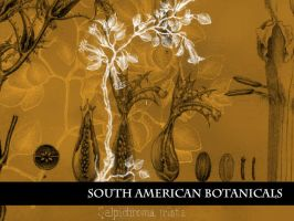 South American Botanicals by remittancegirl