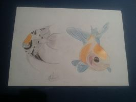 Fish .- by Seluni