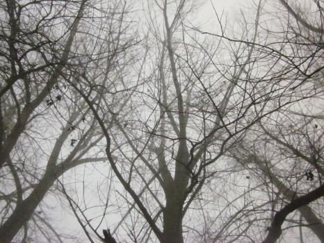 High trees in the mist by ConriSade