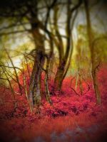 burning forest by StannLeigh