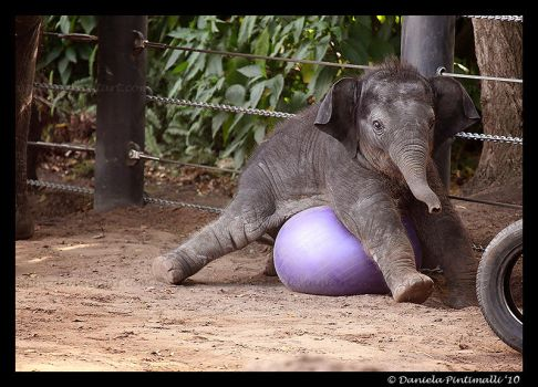 Clumsy Baby Elephant IV by TVD-Photography