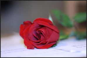 A Simple Rose by Lenka76