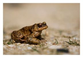 A toad by nicolehinrichs