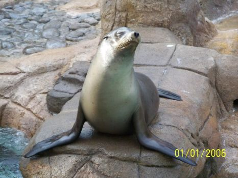 Sea World: Posing Sea Lion by drago-princess