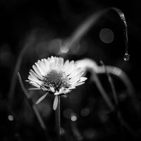 ..: First morning dew - BW :.. by Mademoiselle-P