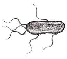 Escherichia Coli Animation for the Game by KingOvRats