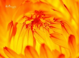 Sunshine by PhotographsByBri
